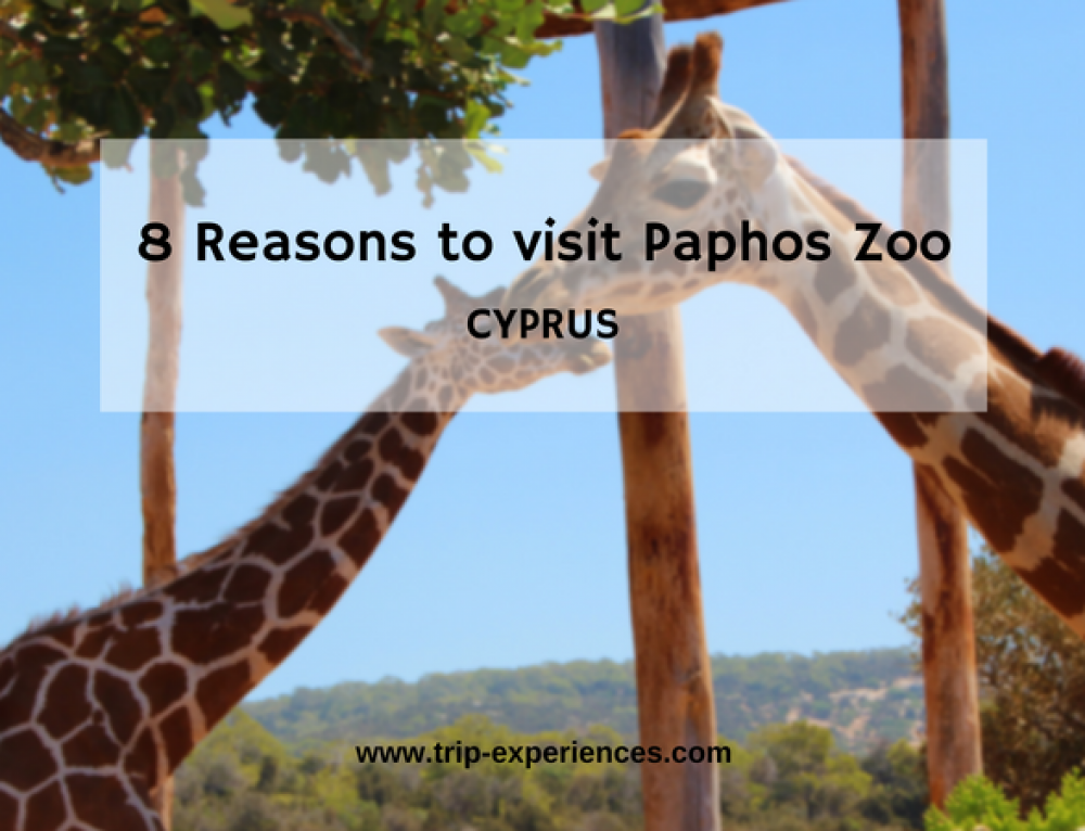 8 Reasons to visit Paphos Zoo