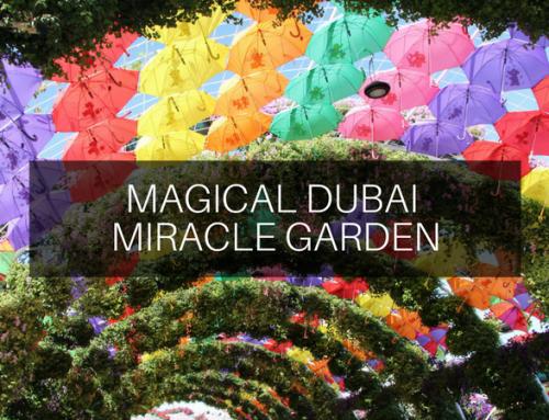Magical Dubai Miracle Garden