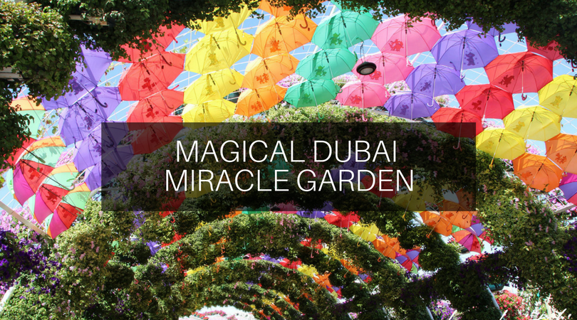 Magical Dubai Miracle Garden